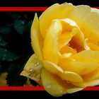 Yellow Rose by Angelica Aguilar