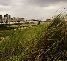 Dune Grass by ClaudineAvalos