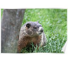 My Woodchuck Friend Poster