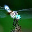 Bug Eyes by Sunshinesmile83