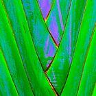 Palm by John Thurgood