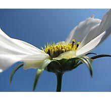 ~COSMOS~ Photographic Print