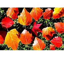 A taste of Autumn Photographic Print