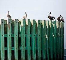 Bumper Roost by phil decocco