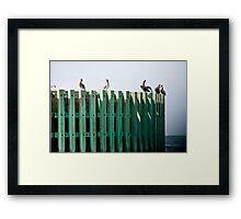 Bumper Roost Framed Print