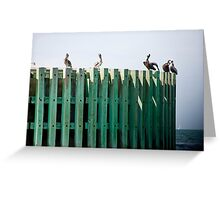 Bumper Roost Greeting Card