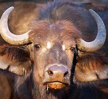 Buffalo Girl by Jennifer Sumpton