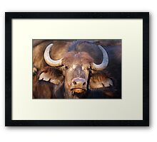 Buffalo Girl Framed Print