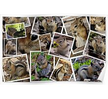 CHIPPY'S BUSY SCRAPBOOKING BABY PICTURES Poster