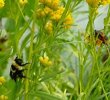 Bumble Bee Watching Bug Love by MYJewels
