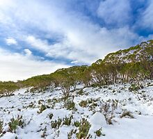 Snow to sky by Maddison Falls