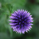 Flowerball by Bluesrose