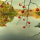 The Red Berries of Autumn by VoluntaryRanger