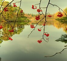 The Red Berries of Autumn by Jamie  Green