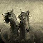 horses themselves they don&#x27;t whisper, they just talk by LarsvandeGoor