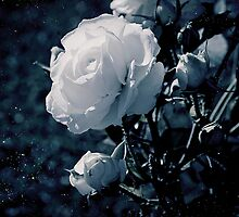 Moonflower by ilva