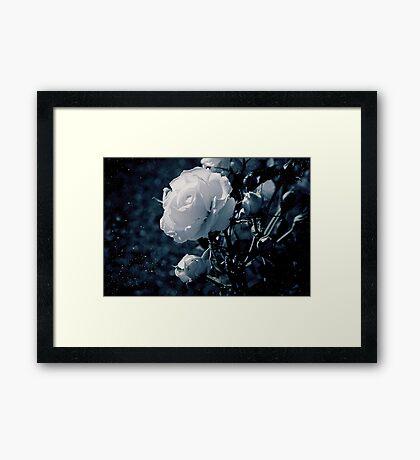 Moonflower Framed Print