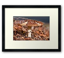 Toadstool at front tree 20100526 0994 Framed Print