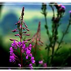 Rosebay Willowherb by AngelaFoster