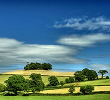 Summer by phil hemsley
