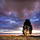 Coolmunda Sunstars - Inglewood Qld Australia by Beth  Wode