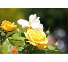 Summer Colours Photographic Print