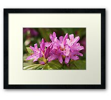 Purple Beauty Framed Print