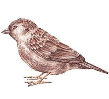 Bird. Sparrow Photographic Print