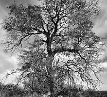 Trees-1 by Craig Hender