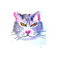 Caffeine Cat Photographic Print