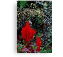 Plant 4350 Canvas Print