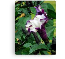 Plant 4344 Canvas Print