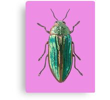 Splendour Beetle Canvas Print