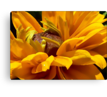The Joy of Late Summer Canvas Print