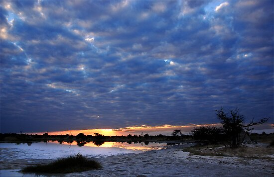 Blue sunset - Okavango Delta, Botswana by Sharon Bishop