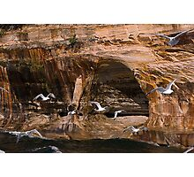 Picture Rocks and gulls Photographic Print
