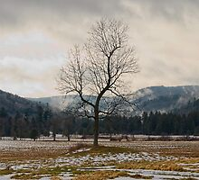Winter Plains by Tom Heeter