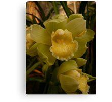 Season 2010 - Orchid 2 Canvas Print