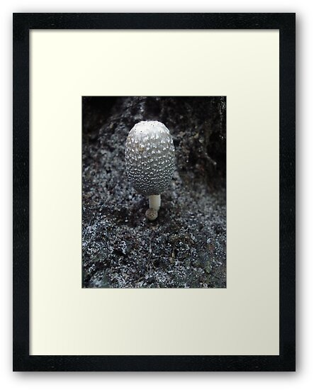 Mushroom on Magnolia by May Lattanzio
