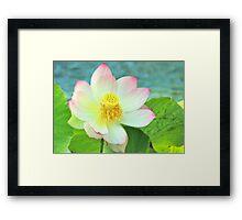 Open Face Lotus Framed Print