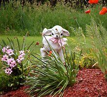 Little Lambs Eat Ivy by vigor