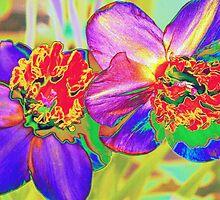 Colorful daffodils by ♥⊱ B. Randi Bailey