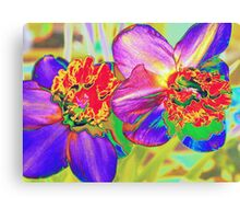 Colorful daffodils Canvas Print