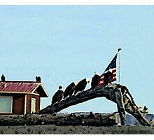 Land of the Free Home of the Brave Photographic Print