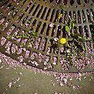 Spring in Paris by Laurent Hunziker