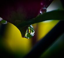 Dew Drop by Raymond Kundra