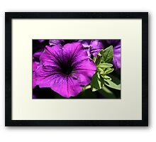 Purple Power Framed Print