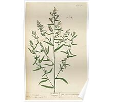 A curious herbal Elisabeth Blackwell John Norse Samuel Harding 1737 0298 Tarragon Poster