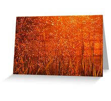 Fields of Golden Grain Greeting Card