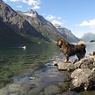 my dogs at the fjord (marsdal) by detlef fischer